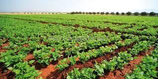 Fiscalité Agricole : Ce Qu'il En Est Réellement